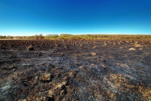 Выжженое поле